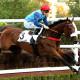 Auteuil - 20015 - Portraits - en Course - BLUE DRAGON, Vincent CHEMINAUD-